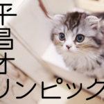 平昌オリンピック猫が大活躍!猫カーリングやスケートTwitter画像