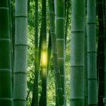 かぐや姫の物語と竹取物語の違いを比較!罪と罰の意味をネタバレ解説